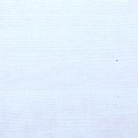 PRIMA_1166 White Birch